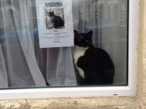 Missing cat doesn't look like it's missing, actually