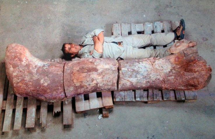 'World's biggest dinosaur': Bones of 130ft long sauropod discovered in Argentina