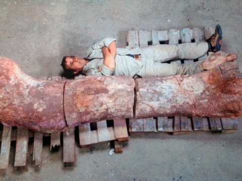'World's biggest dinosaur': Bones of 130ft long sauropod discovered in Argentina
