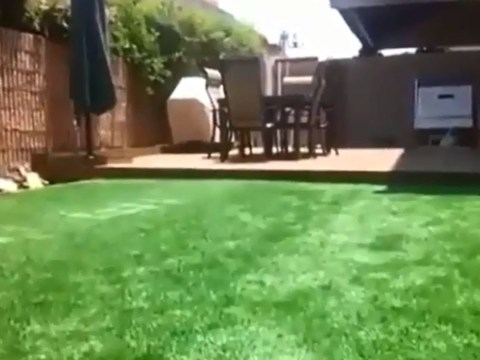 Think this is a normal garden lawn? Think again