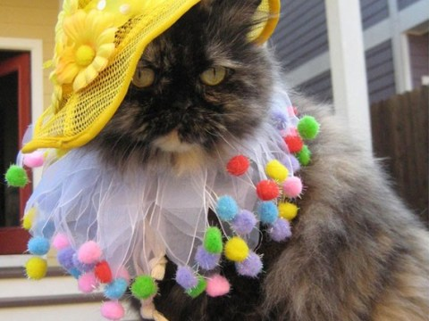 18 photos of cats in clothes that are so darn cute you might have a breakdown