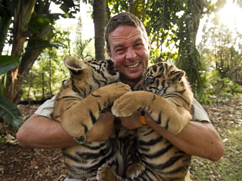 Eight reasons why tigers would make epic house cats