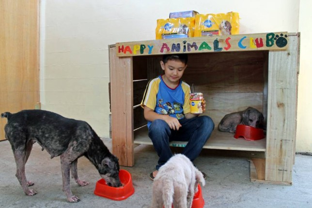 Ken Amante: Philippines boy to open Happy Animals Clubs shelter after online donations