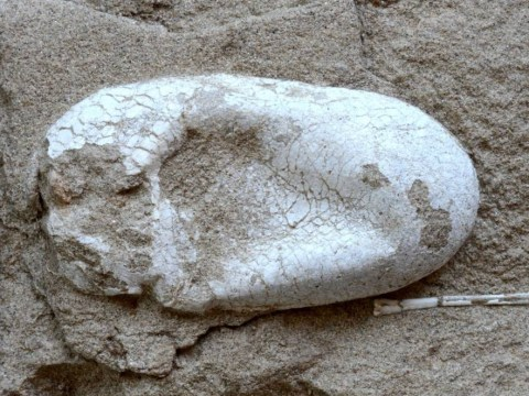 Huge cluster of complete pterosaur eggs found in China