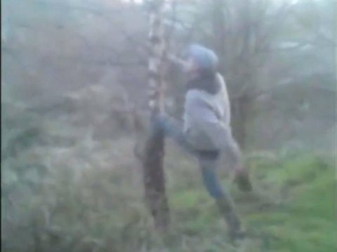 Men shake terrified cat from tree so dogs can attack it in shocking footage