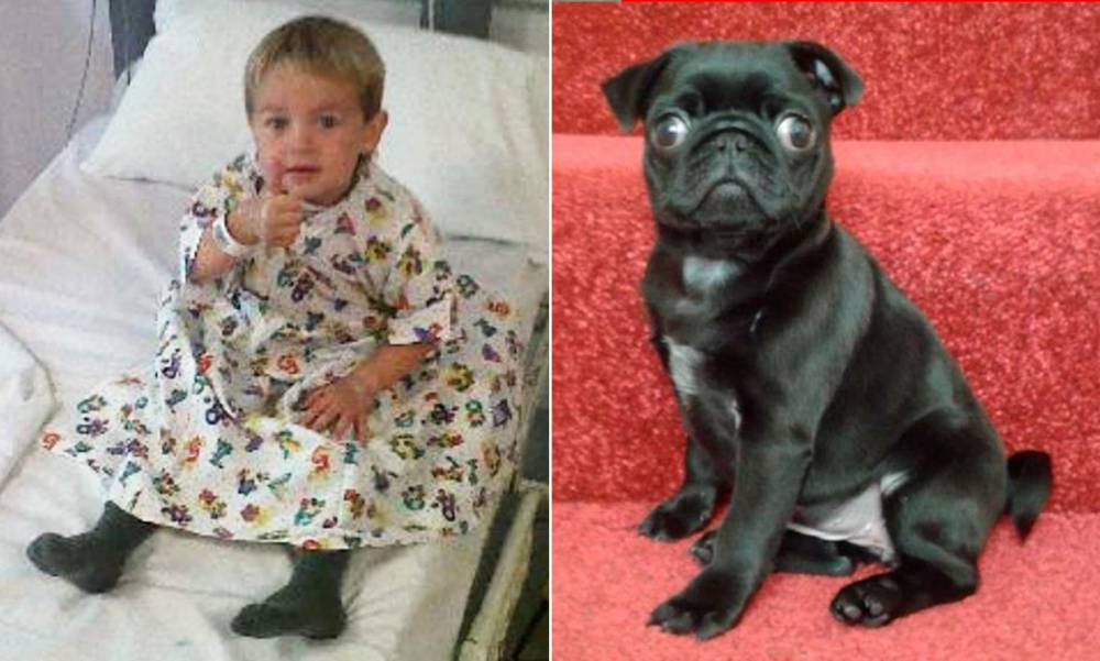Facebook appeal to find heartless thieves who stole sick boy's puppy