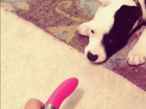 Vital question of the day: What do dogs make of vibrators?