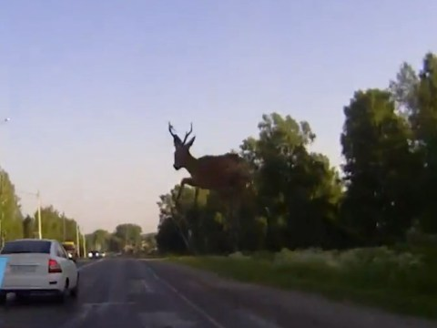 Dashcam captures moment deer crashes through windscreen