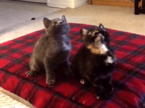 Two kittens get down and dirty in synchronised moves to crunk/dance anthem