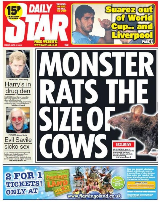 Monster rats, Rats the size of cows, Rat invasion, Daily Star front page, Daily star monster rats