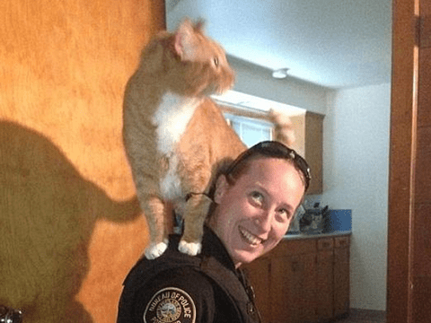 Purrtrified: Scaredy cat jumps on police officer's shoulders as she looks for suspect