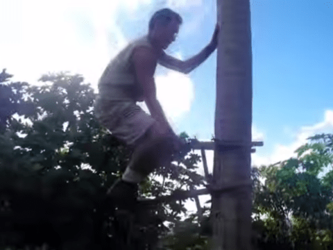Inventor tests out manual stair-lift for palm trees