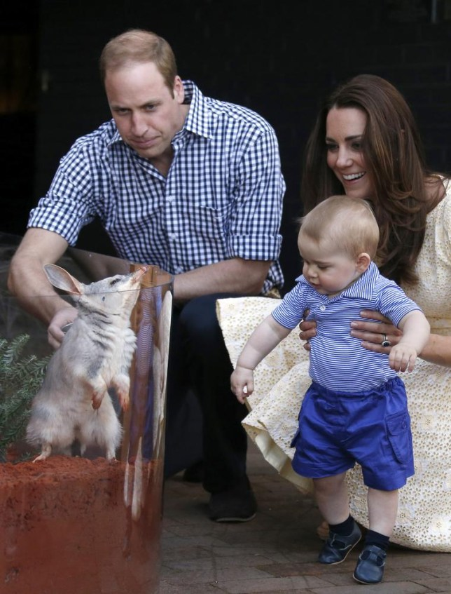Britain's Kate, the Duchess of Cambridge and her husband Prince William watch as their son Prince George looks at an Australian animal called a Bilby, which has been named after the young prince, during a visit to Sydney's Taronga Zoo, Australia Sunday, April 20, 2014. (AP Photo/David Gray, Pool) AP Photo/David Gray, Pool