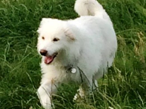 Glastonbury 2014: Dog found abandoned in tent is named after Dolly Parton