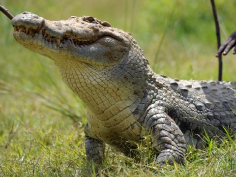 Escaped crocodile caused plane crash that killed British pilot, inquest told