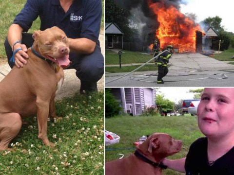 Deaf boy saved by heroic pitbull after house catches fire