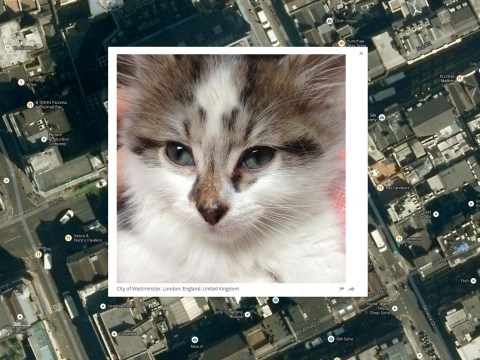 This guy knows where your cat lives… and he has a website to prove it