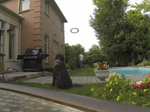 This might be the cleverest frisbee catching dog…
