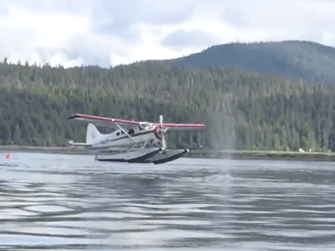 Look before you land: Watch this plane nearly hit a WHALE while landing on water
