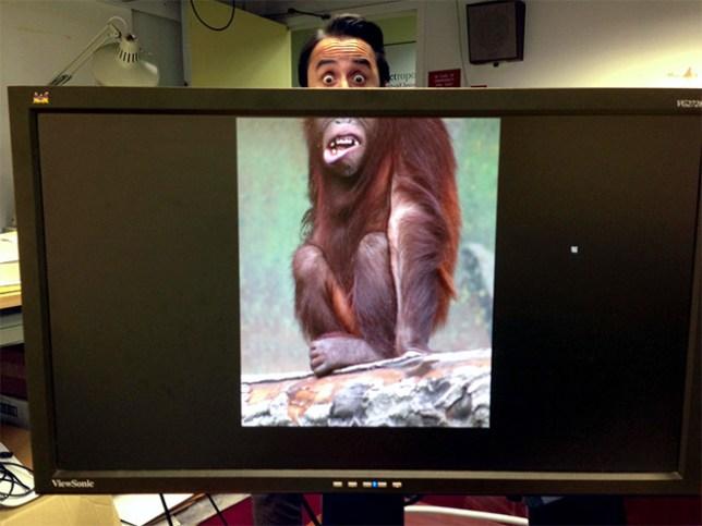 (Picture: Desk Safari)
