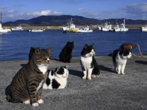 9 places all cat-lovers need to visit before they die