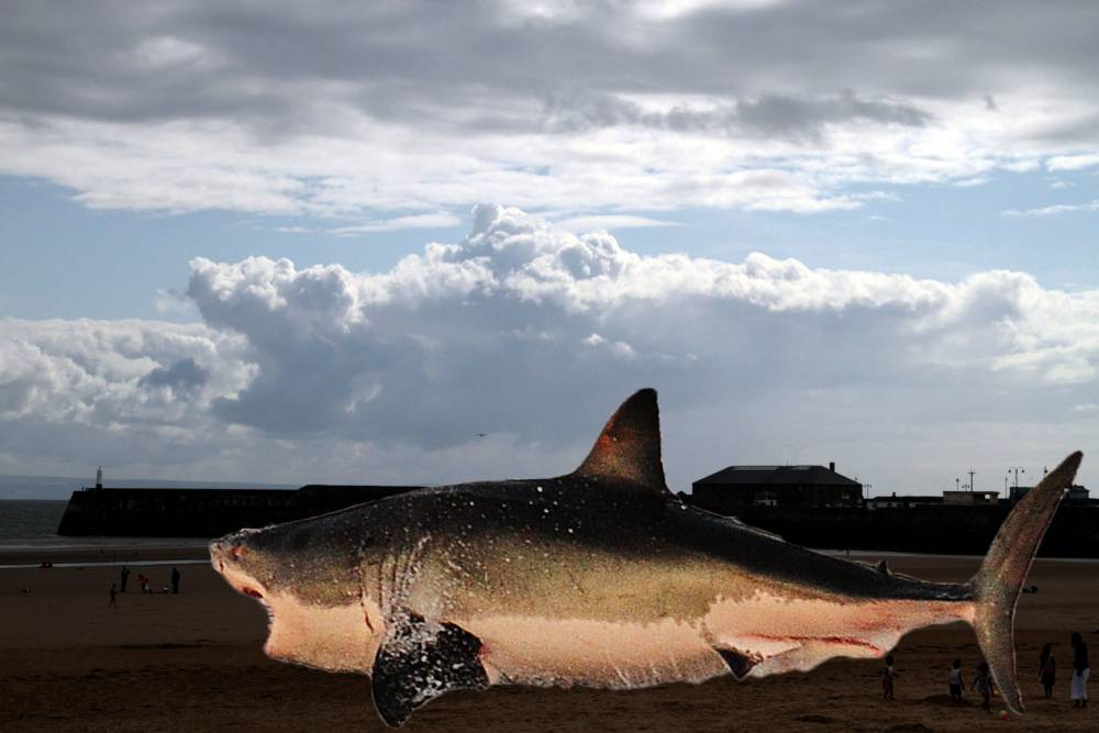 There's a shark in the clouds… could it develop into a sharknado?
