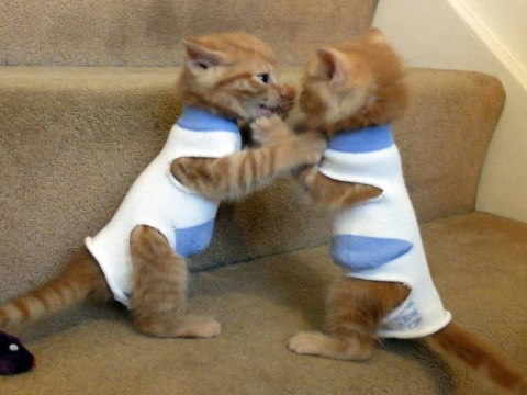 Abandoned kittens wearing baby socks as coats is the cutest thing ever