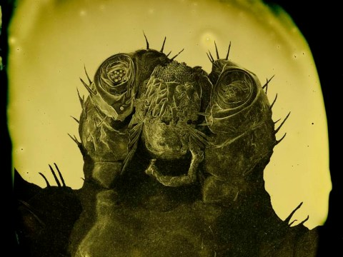 Parasite selfies: You're never too tiny or disgusting to pose for your own portrait