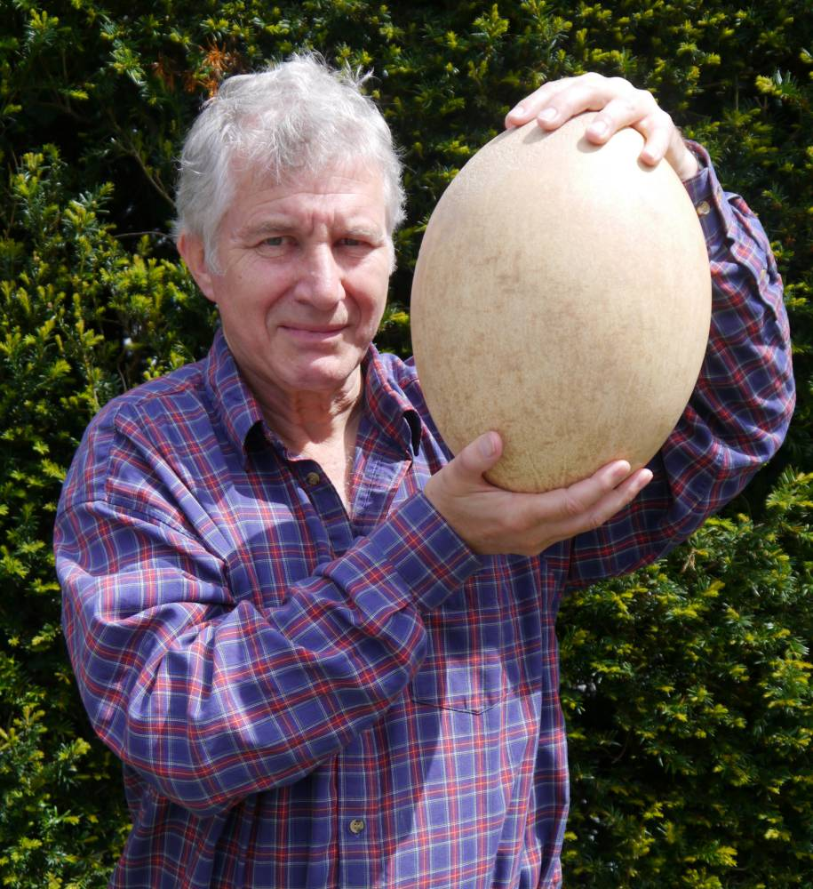 The world's biggest egg is yours for only £50,000