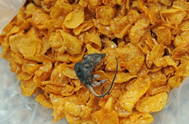 Pauline Henderson took a photograph of her grisly find. She was about to give the bowl of Crunchy Nut to her grandson. It used to be his favourite cereal… (Picture: Solent News)