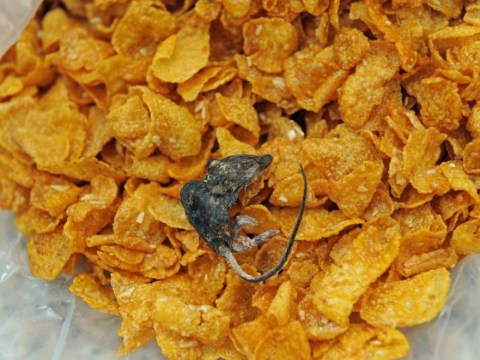 Grandmother gets an unwelcome freebie in her 'ludicrously tasty' box of Crunchy Nut