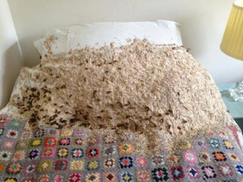 Enormous wasp nest takes over bedroom after homeowner forgets to shut the window