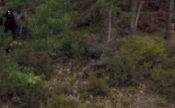 Bigfoot stands in the top left of this image - the eyes and mouth have been 'digitally added' (Picture: YouTube)