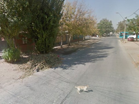 Did Google Street View car hit this pet dog? Judge the evidence for yourself
