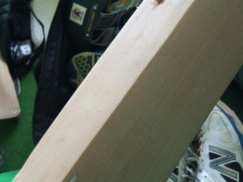 New Zealand cricketer Jimmy Neesham receives bat back from American customs officials – with holes drilled into it