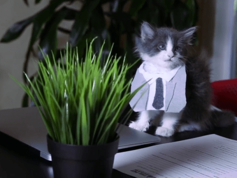 Fifty Shades Of Grey the movie with kittens is way less creepy than it sounds