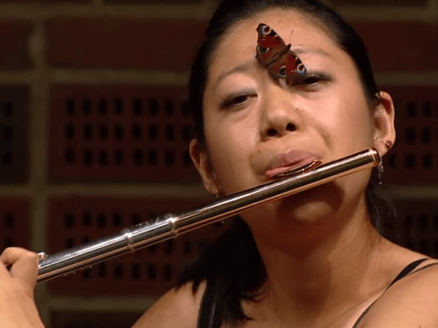 Flautist carries on unfazed after butterfly lands on her face during concert