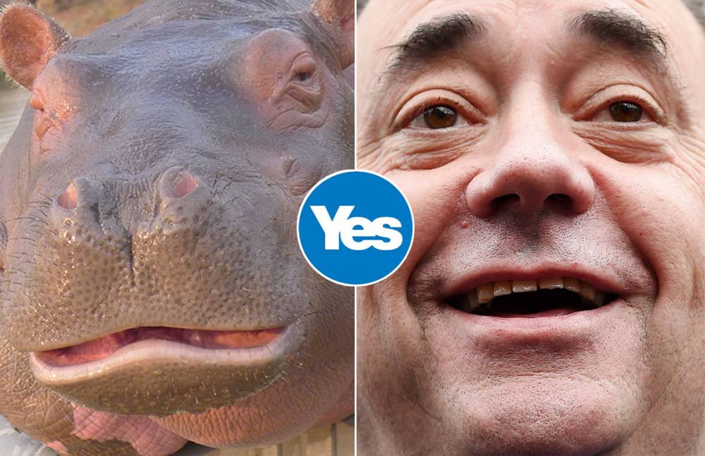 The Scottish referendum debate really does have some political animals