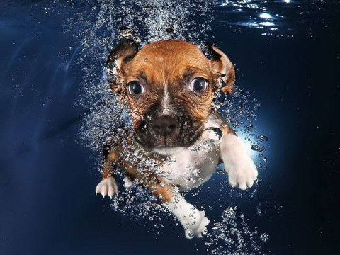 Stop what you're doing, these pictures of puppies swimming underwater are here to brighten your day