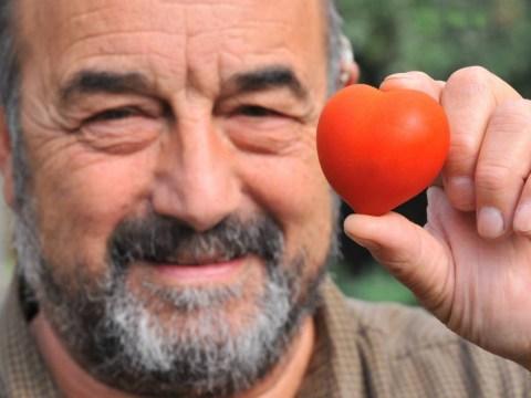 Tomato tom-heart-o: Gardener sells heart-shaped fruit for £16 for charity