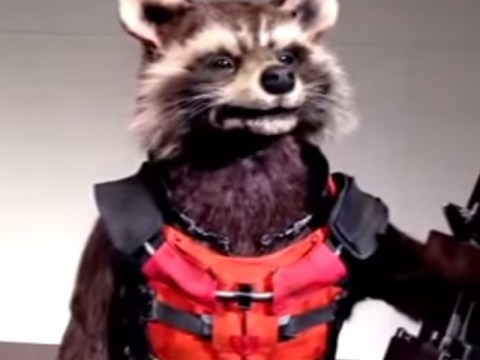 This animatronic version of Rocket Racoon from Guardians Of The Galaxy is seriously creepy