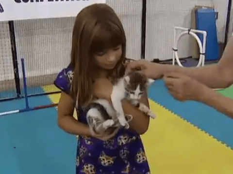 Who said that dogs are a man's best friend? Welcome to the mecca for cat lovers