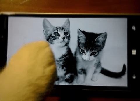 Just some cute cats in over-sized outfits texting one another
