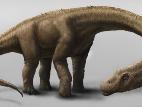 This dinosaur was seven times bigger than a T rex