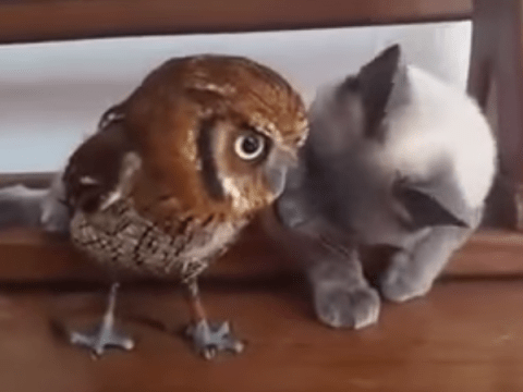 This owl and pussycat are bffs