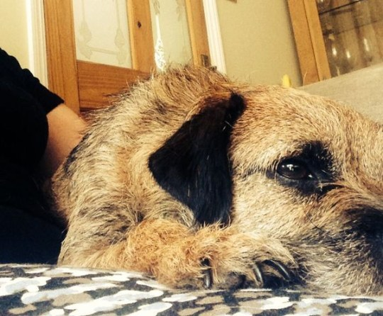 Toby the border terrier went missing from outside his house  on 10 October