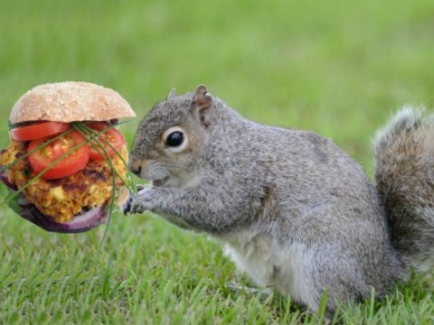 There's a squirrel burger challenge in the Forest Of Dean and it's a bit weird
