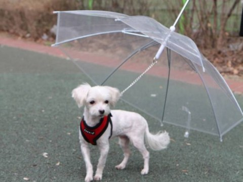 Puppia's dog umbrella is this season's must-have doggy accessory
