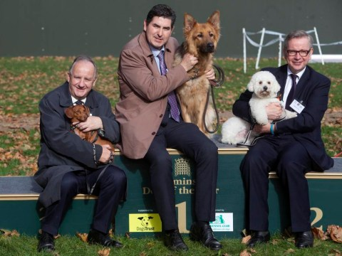 So who's the top dog of Westminster politics? We're talking dogs and Michael Gove