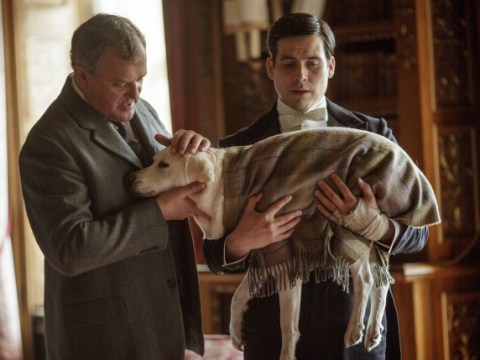 It was Hugh Bonneville's fault that Isis the dog was killed off Downton Abbey
